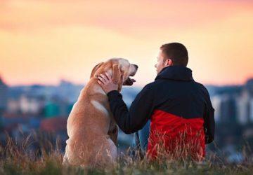 «Comment l'homme parle-t-il de l'animal?» – Christophe Cervellon analyse le thème de culture générale en prépa HEC