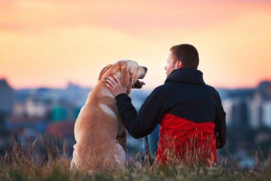 « Comment l'homme parle-t-il de l'animal ? » – Christophe Cervellon analyse le thème de culture générale en prépa HEC